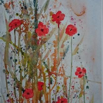 Vallmo i blom
